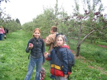 pommes 2005 (24)